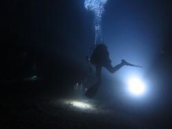 浮遊期幼魚雰囲気1。