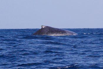 クジラくん