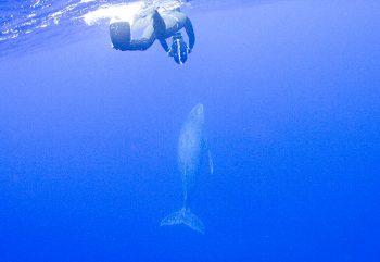 ダイバーとクジラ君