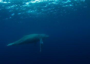 水中のクジラ