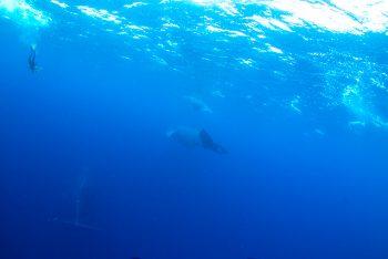 3頭の母子クジラ