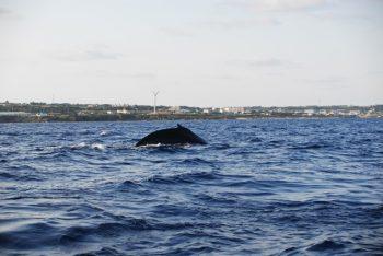 タラソ沖のクジラ