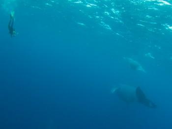 クジラスイム