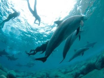イルカさん大群