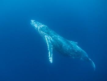 イルカの次はクジラ!